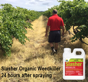 Slasher vineyard LR